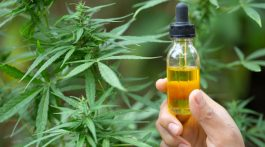 All You Want to Know About CBD Oil
